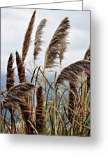 Central Coast Pampas Grass Greeting Card