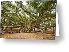 Central Court - Banyan Tree Park In Maui. Greeting Card