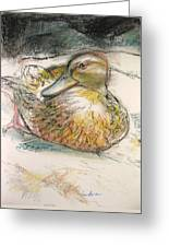 Central Park Duck On The Rocks Greeting Card