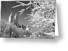 Central Park - Nyc Greeting Card