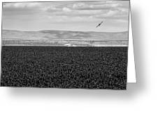 Central Washington, Usa. A Crop Duster Greeting Card
