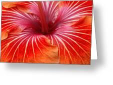 Centre Of Bright Orange Hibiscus Greeting Card
