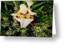 Centrepiece  Greeting Card