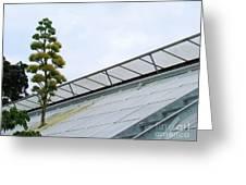 Century Plant Greeting Card