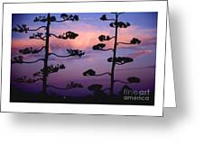 Century Sunset Greeting Card