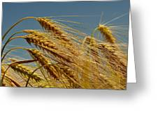 Cereals Greeting Card
