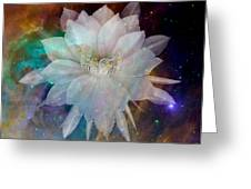 Cereus Chaos Greeting Card by Tanya Hamell