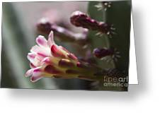 Cereus Hexagonus Pink Greeting Card