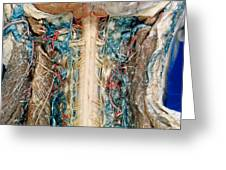 Cervical Spinal Cord, Posterior View Greeting Card