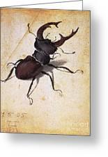 Cervus Lucanus Greeting Card