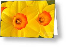 Ceylon Daffodils Greeting Card