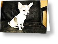 Chachi Al La Fresco Greeting Card