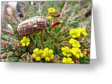Chafer Beetle On Medusa Succulent Greeting Card