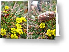 Chafer Beetle On Medusa Succulent In 3d Stereo Greeting Card