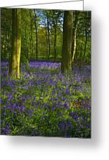 Chalet Wood Wanstead Park Bluebells Greeting Card