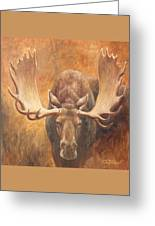 Bull Moose - Challenge Greeting Card