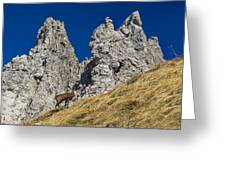 chamois in Alps Greeting Card