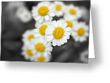 Chamomile Greeting Card by Jane Rix