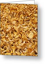 Chanterelle Mushroom Greeting Card