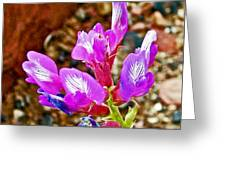 Chaparral Pea In Painted Desert Of Petrified Forest National Park-arizona  Greeting Card