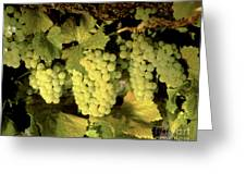 Chardonnay Wine Clusters Greeting Card