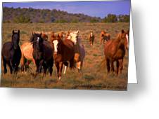 Charge Of The Mustangs  Greeting Card by Jeanne  Bencich-Nations