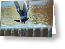 Charge Of The Pigeon Greeting Card