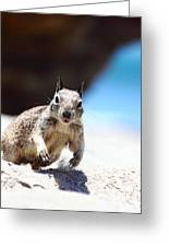 Charging Ground Squirrel Greeting Card