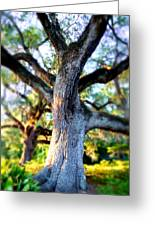 Charleston Grand Oak At Sunset Greeting Card