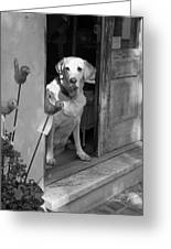 Charleston Shop Dog In Black And White Greeting Card