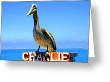 Charlie The Pelican Greeting Card