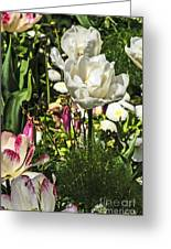 Chartres Garden White Greeting Card
