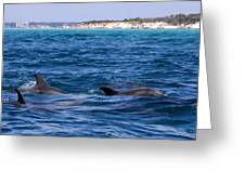 Chasing Dolphins  Greeting Card