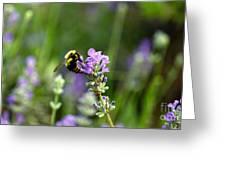 Chasing Nectar Greeting Card