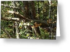 Chattahoochee River Trails Greeting Card
