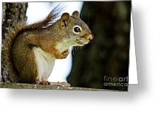 Chatty Squirrel Greeting Card