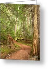 Cheakamus Lake Path Greeting Card
