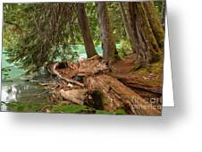 Cheakamus Lake Rainforest - British Columbia Greeting Card