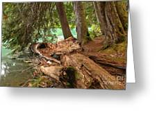 Cheakamus Lake Shoreline Greeting Card