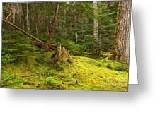 Cheakamus Rainforest Floor Greeting Card