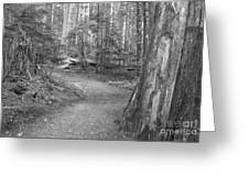 Cheakamus Trail In Black And White Greeting Card