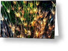 Cheat Grass 15750 Greeting Card