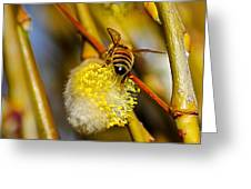 Check Out My Beehind Greeting Card