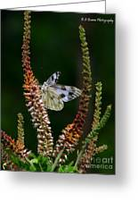Checkered White On An Indigo Greeting Card