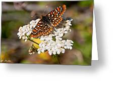 Checkerspot Butterfly On A Yarrow Blossom Greeting Card