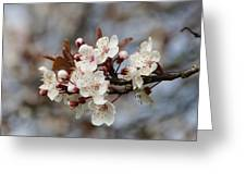Cheerful Cherry Blossoms Greeting Card