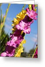 Cheerful Gladiolus Greeting Card