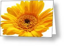Cheerful Yellow Greeting Card