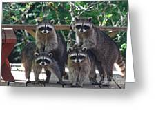 Cheerleading Raccoons Greeting Card by Kym Backland