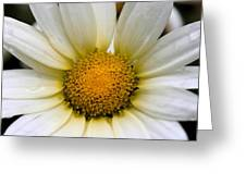 Cheery Daisy  Greeting Card